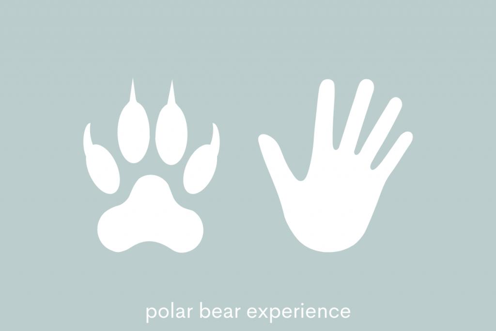 bear in inuit